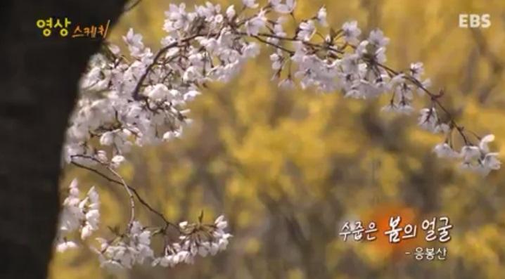 영상 스케치 <수줍은 봄의 얼굴>
