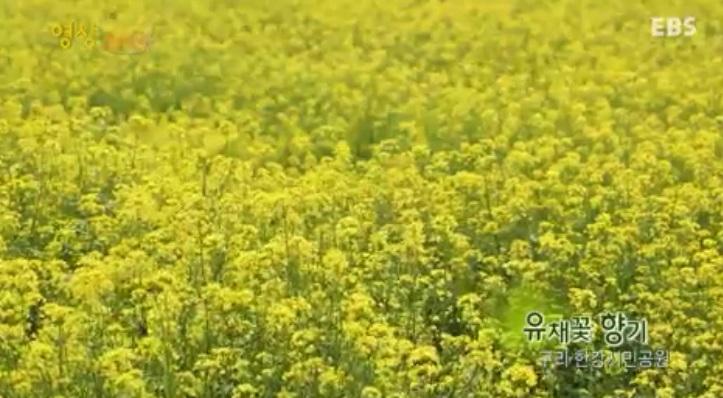 영상 스케치 <유채꽃 향기>