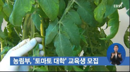 농림부, '토마토대학' 교육생 모집