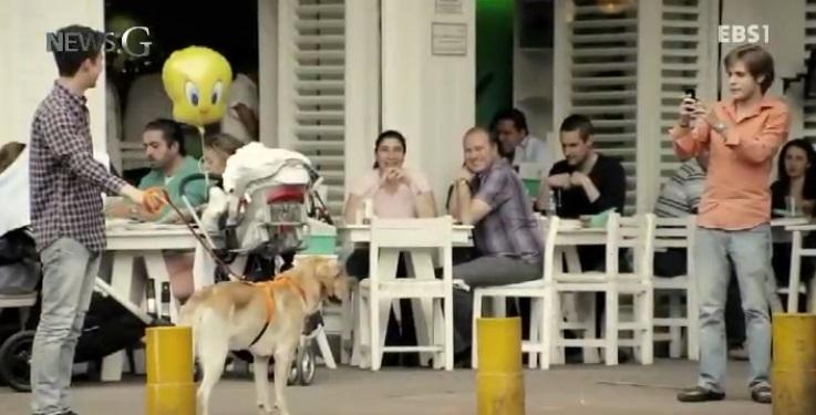 <뉴스G> 강아지들의 주인을 찾습니다