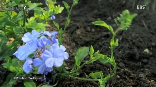 <뉴스G> 아스팔트 위에 피어난 꽃
