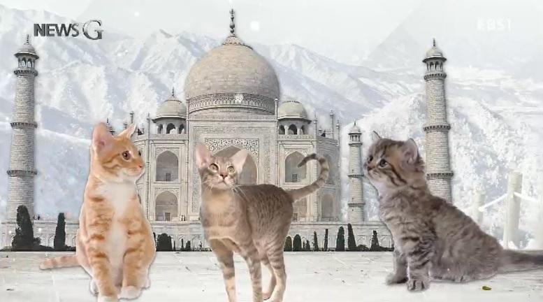 <뉴스G> '이스탄불의 고양이'를 아시나요?
