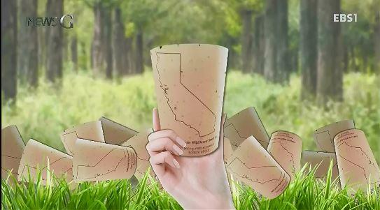 <뉴스G> 나는 매일 나무를 심습니다