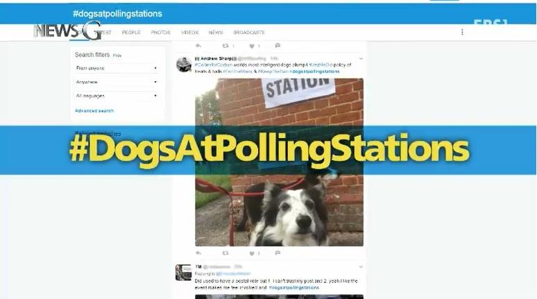 <뉴스G> '반려견과 함께 투표 인증'