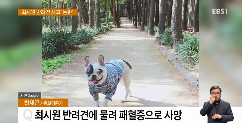 <하재근의 문화읽기> 최시원 반려견 사고 '논란'