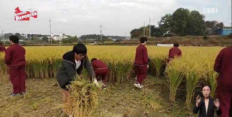 <스쿨리포트>  PC방 대신 논으로‥농사짓는 학생들