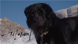 세상에 나쁜 개는 없다 시즌2