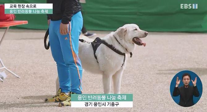 <교육현장 속으로> 반려동물 축제 '댕댕아 학교 가자'