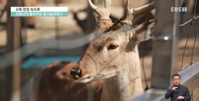 <교육현장 속으로> 사육사가 들려주는 꽃사슴 이야기