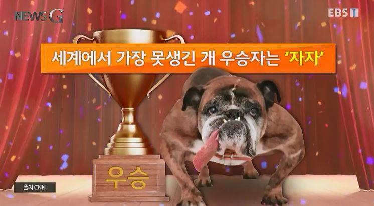 <뉴스G> 세계에서 가장 아름다운 개