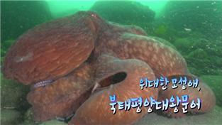 경이로운 자연의 세계(HD)