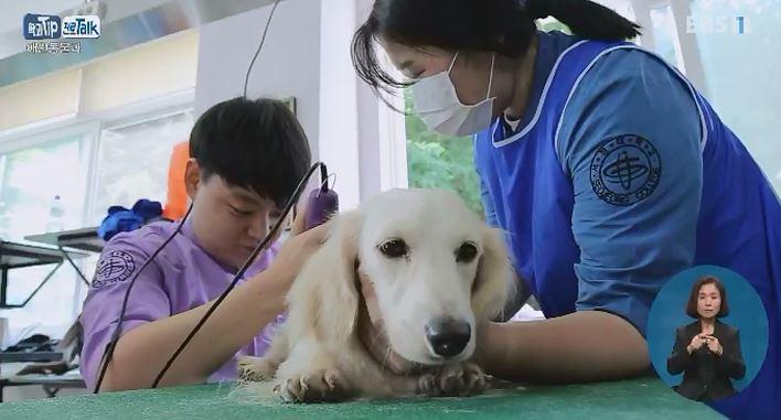 <학과 Tip 진로 Talk> 사람과 동물의 함께 사는 삶을 위한 '애완동물과'
