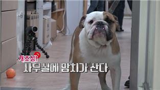 세상에 나쁜 개는 없다 시즌3