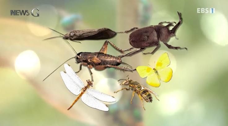 <뉴스G> 100년 후, 곤충의 운명은?