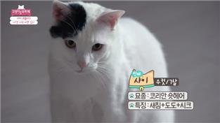고양이를 부탁해 시즌3