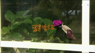 다큐동화  [달팽이]