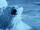 지식채널e, '얼음 위를 걷고 싶어요'