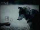 인간과 개