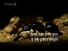 개미 에피소드2 왕국의 탄생