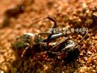 개미 에피소드3 왕국의 번영