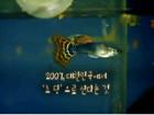2007, 대한민국에서 '초딩'으로 산다는 것