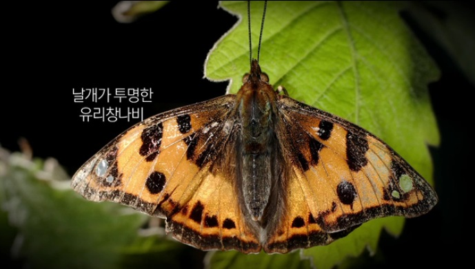 나비에 미치다