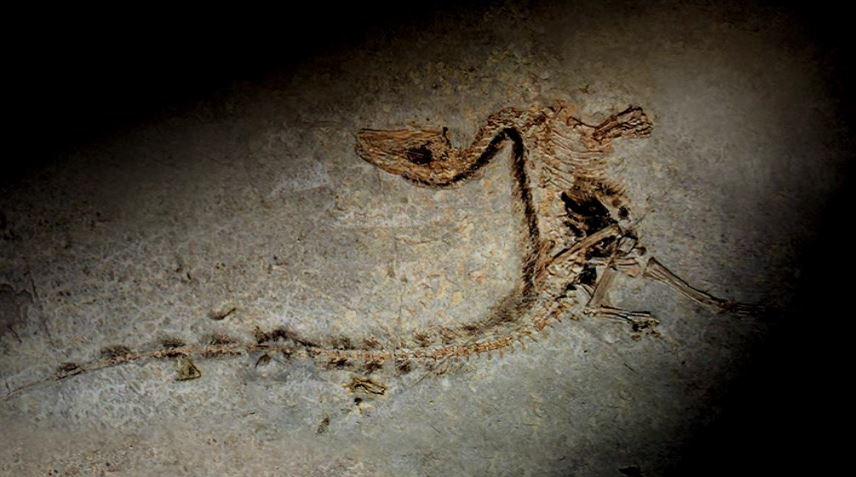 사라진 세계 1부 - 뼈와 껍데기의 오디세이