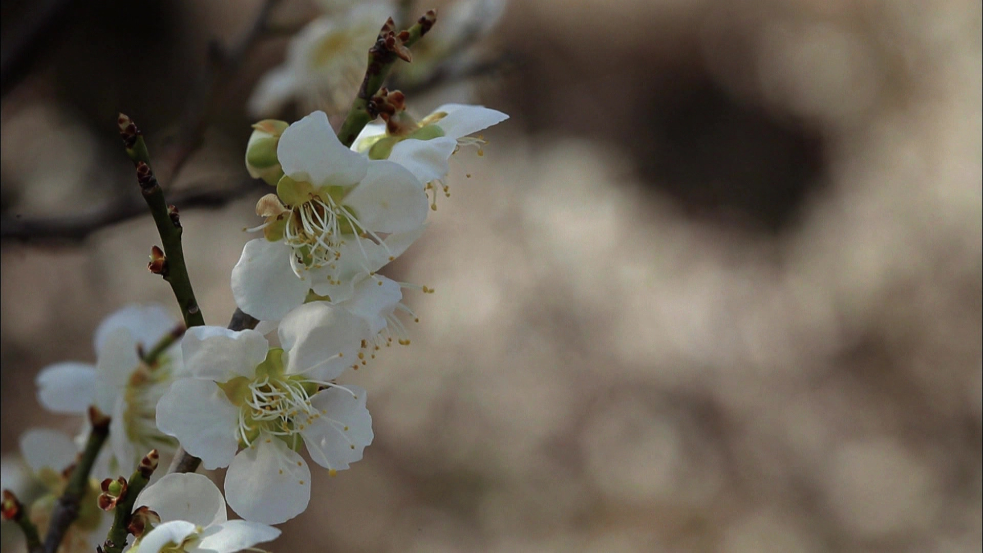 '제1의 봄第一春'을 찾아