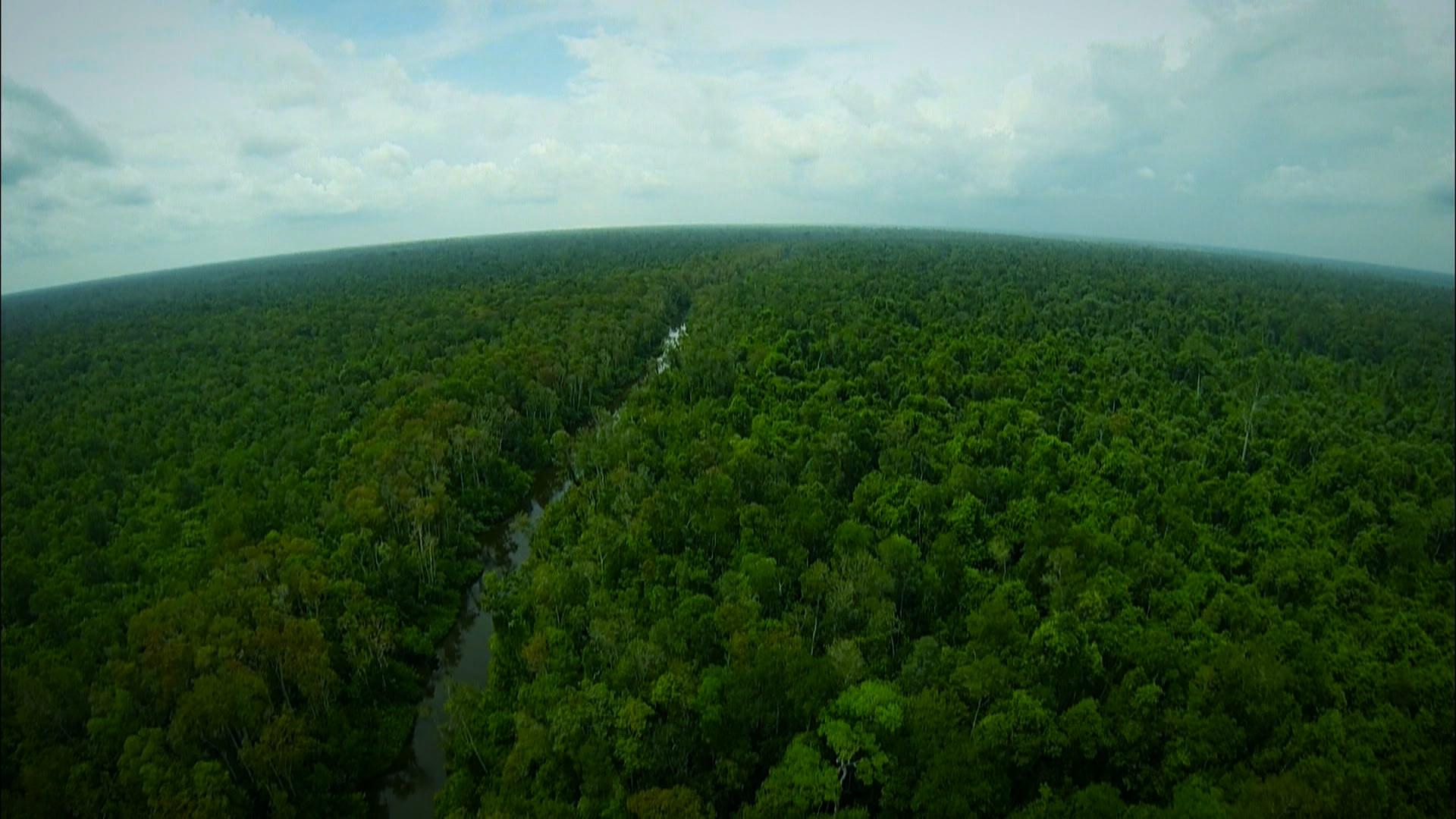 숲의 사람, 찬텍
