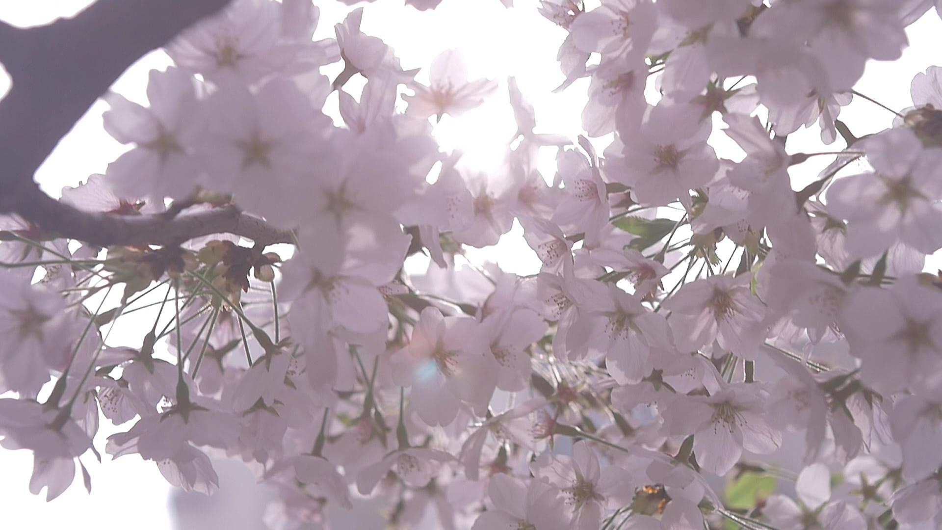 다시, 봄(春)