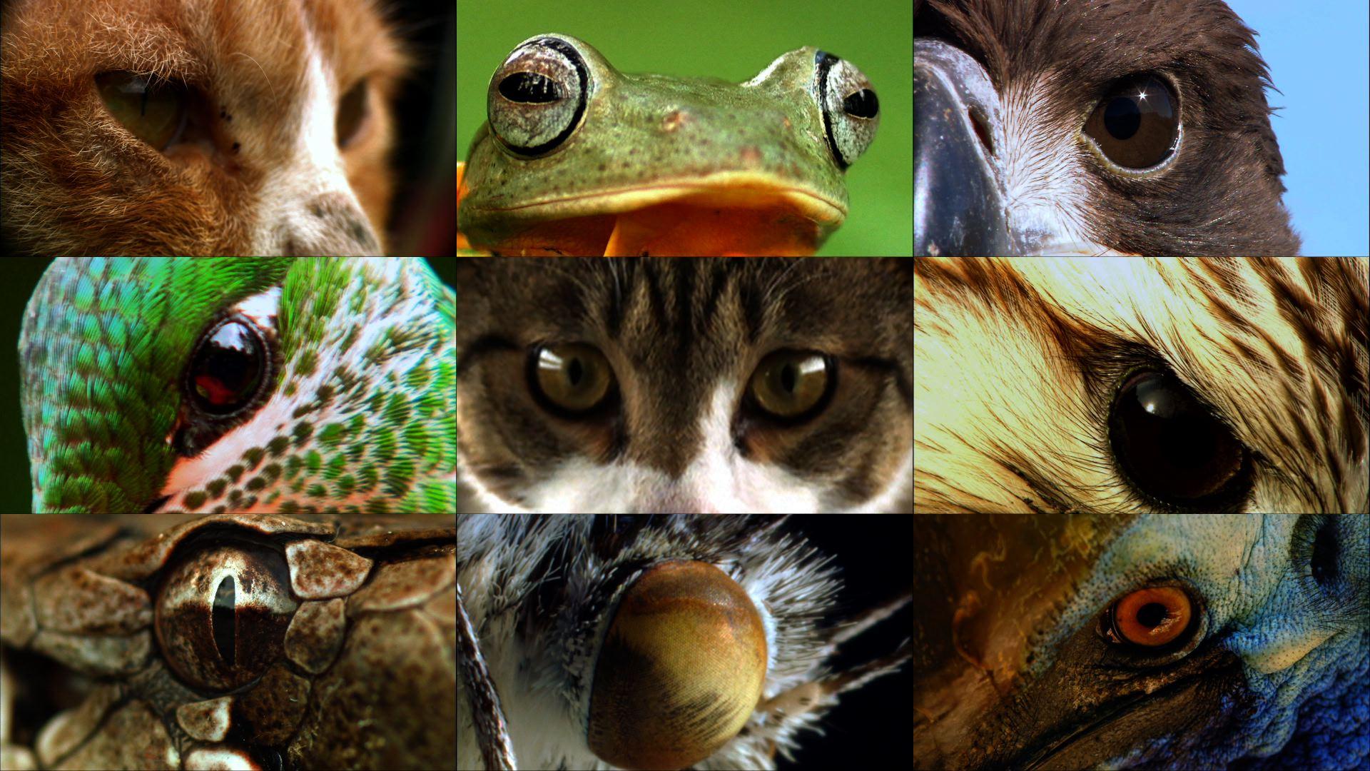 동물의 눈에 세상은