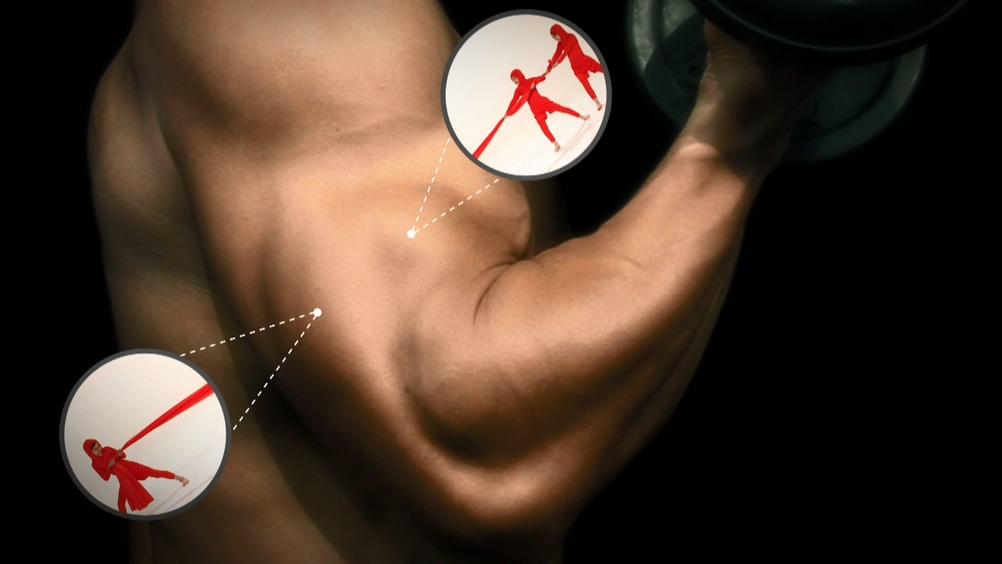 근육이 바쁜 진짜 이유