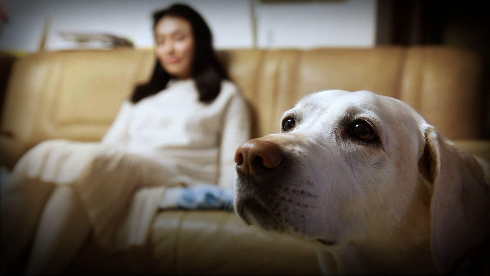 그녀와 그녀의 강아지