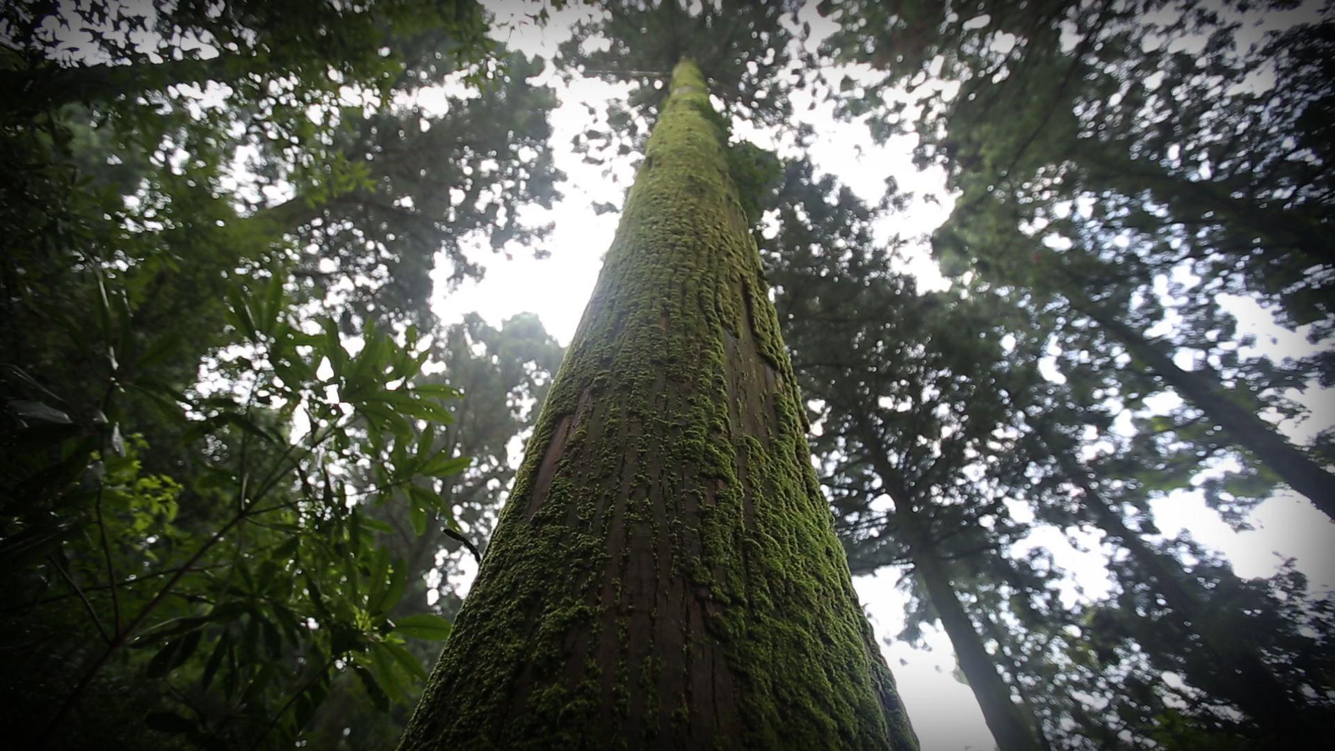 숲에서 우주를 보다