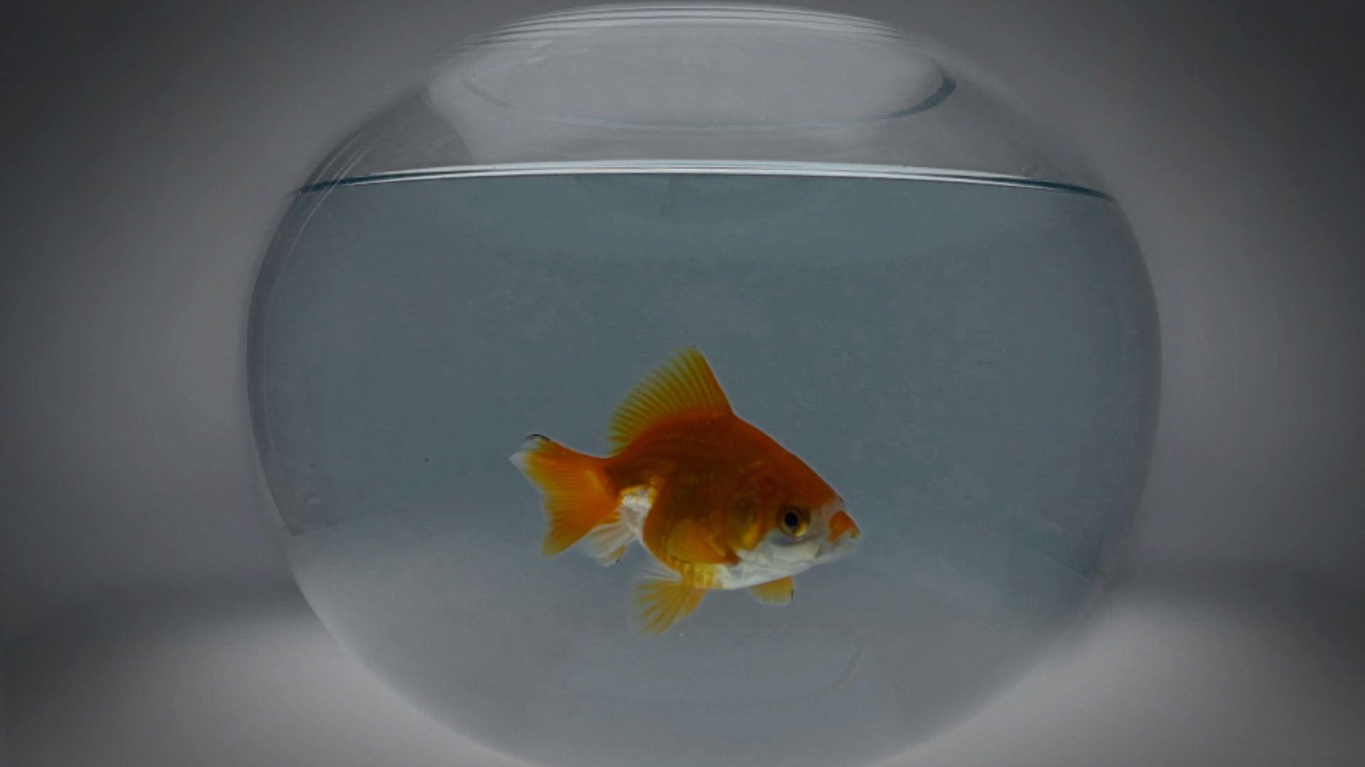 기묘한 물고기 Odd Fish