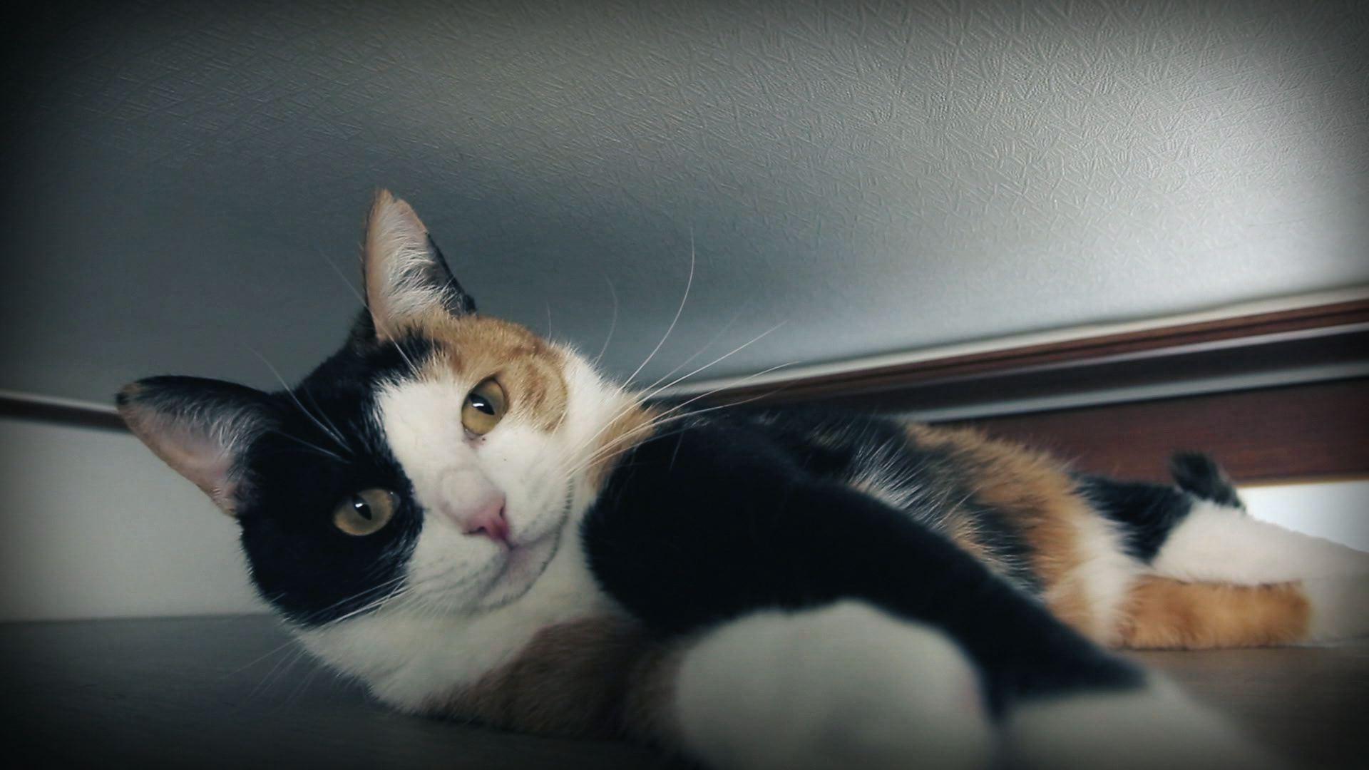 인간과 동거 중인 고양이 모임