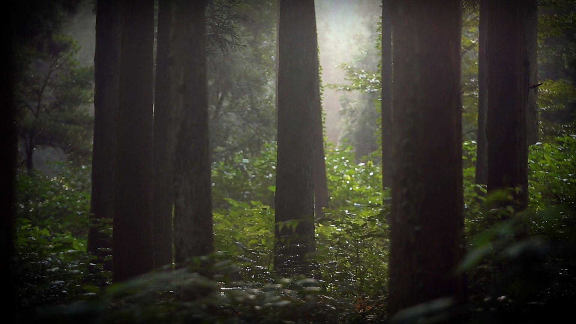 우리가 사랑하는 숲이에요