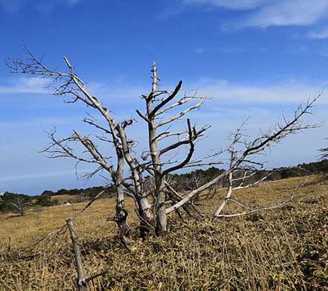 하나뿐인 지구, 조릿대의 난 - 한라산 생태탐방기
