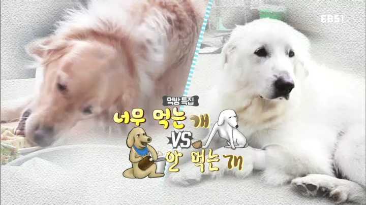 세상에 나쁜 개는 없다, 먹방특집 너무 먹는 개 vs 안 먹는 개