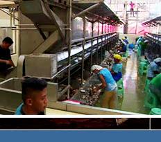 극한 직업, 필리핀 코코넛 가공 공장