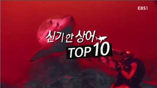 세계의 눈, 신기한 상어, TOP 10