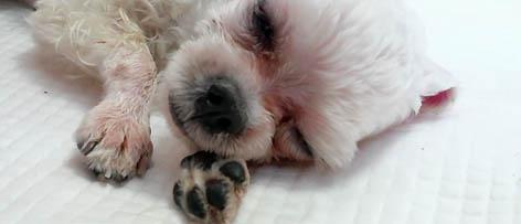 세상에 나쁜 개는 없다, 버려진 개 생명