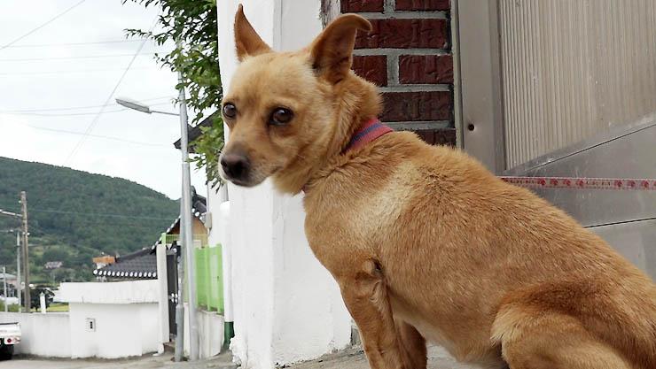 세상에 나쁜 개는 없다, 시골 개, 1미터의 삶