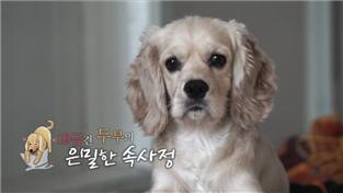 세상에 나쁜 개는 없다 시즌2, 19금견 두부의 은밀한 속사정