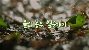 세계의 눈, 숲의 농부 잎꾼개미