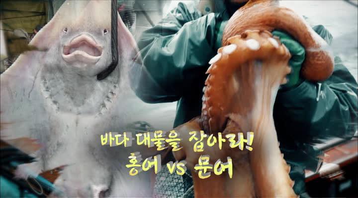 극한 직업, 바다 대물을 잡아라! 홍어 vs 문어