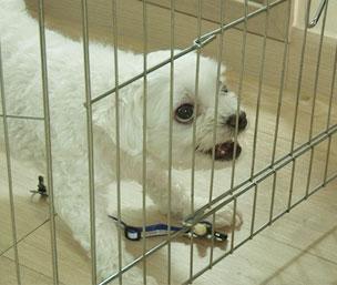 세상에 나쁜 개는 없다, 킬미 힐미, 다중이 쫑이의 속사정