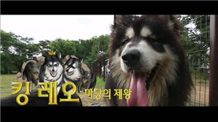세상에 나쁜 개는 없다 시즌2, 킹 레오:마당의 제왕