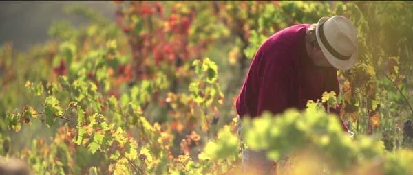 와인의 땅, 프리오라트
