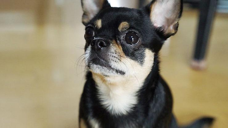 강형욱의 세상에 나쁜 개는 없다,  비폭력주의 삼식이